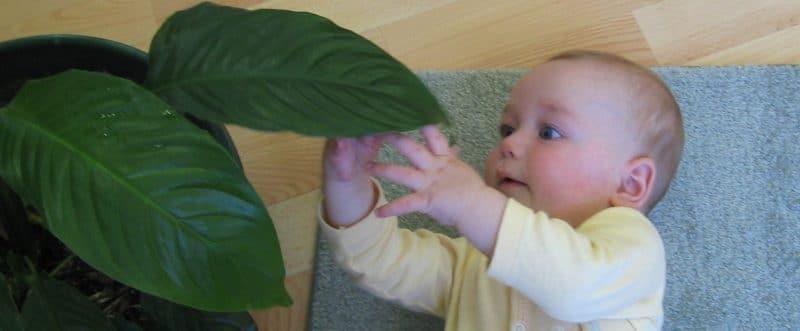 Préparer un environnement Montessori à la maison (naissance à 1 an)